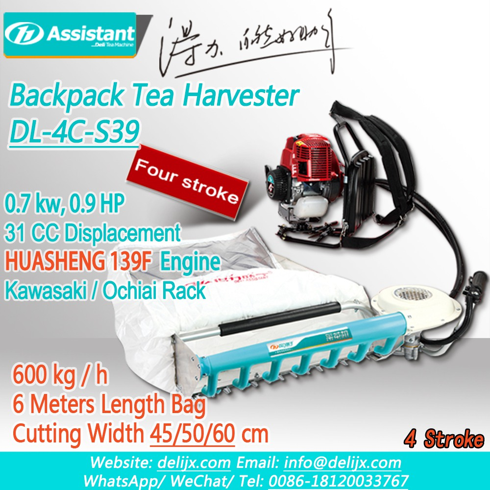 Cina HUASHENG 139F 4 Stroke Engine With 600mm Cutting Width Tea Collection Machine DL-4C-S39 pabrikan
