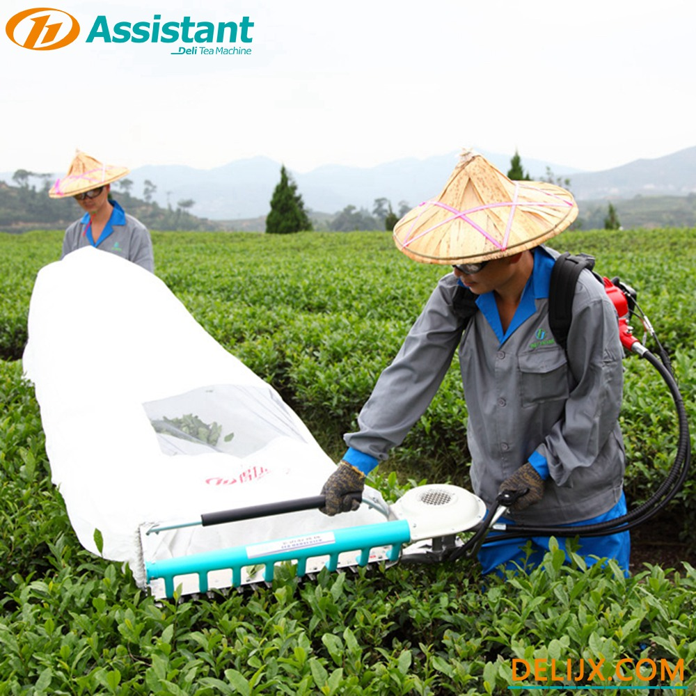Gasoline Tea Leaf Cutting Machine
