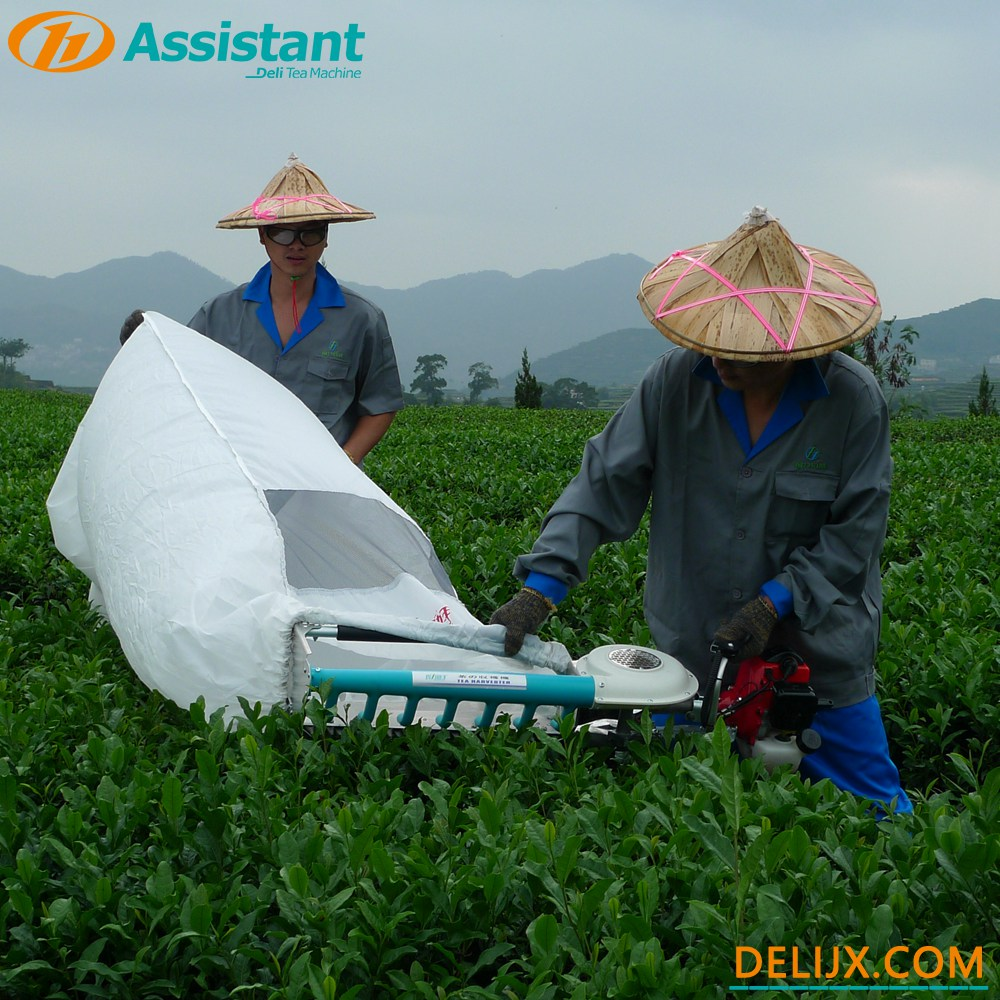 Hand-Held Type 2 Stroke Tea Leaf Harvesting Machine With NATIKA Engine DL-4C-T50A5