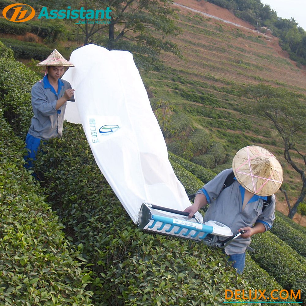 4C-Z-Mini-Type-Backpack-Tea-Leaf-Picking-Machine-China-Factory/Mini-Type-Backpack-Tea-Leaf-Picking-Machine-China-Factory