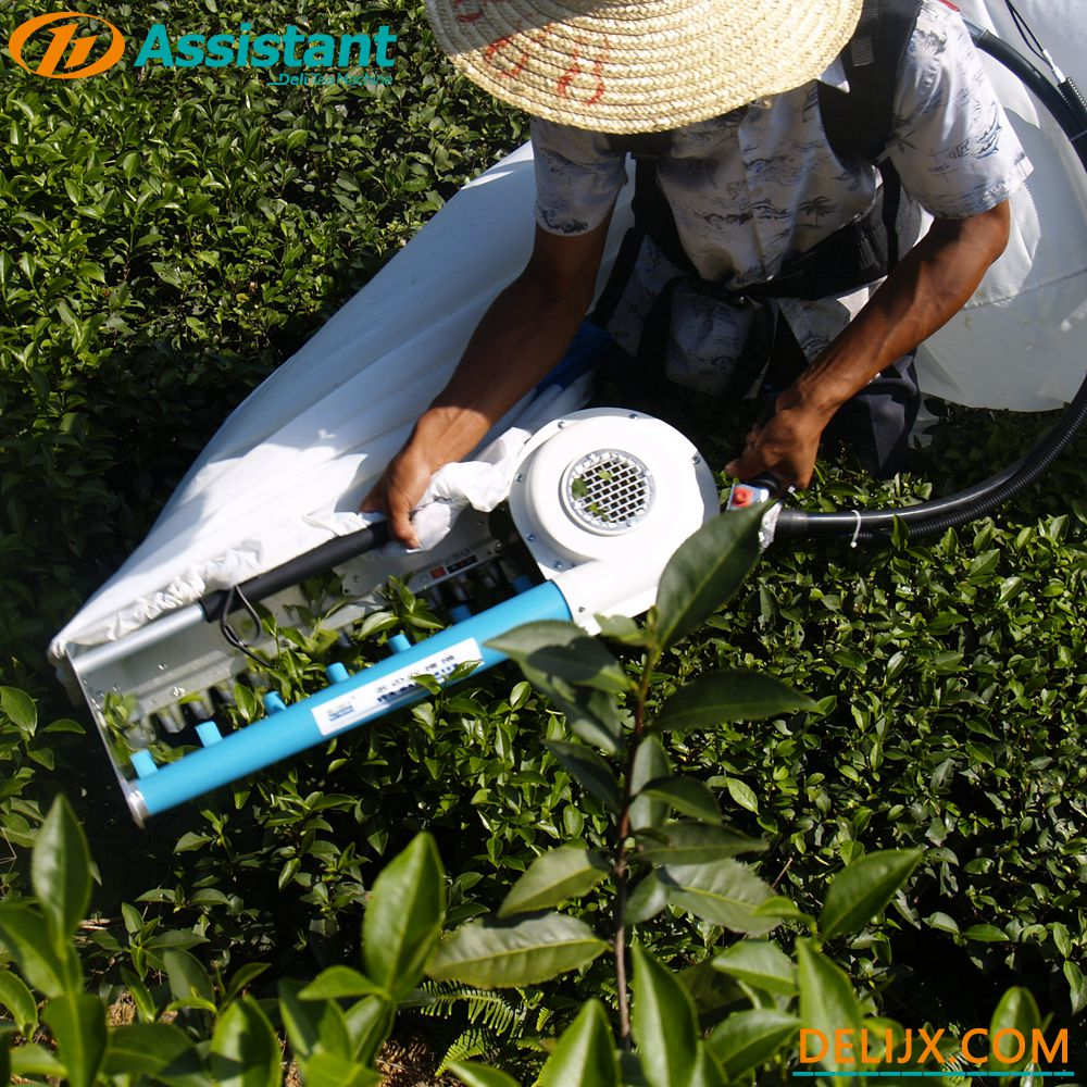 Portable Gasoline Tea Plucking Machine