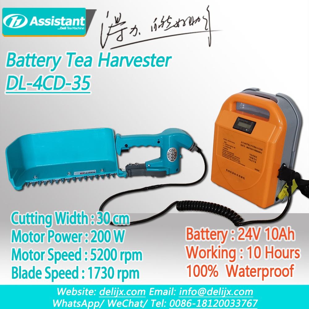 China 24V 10Ah Lithium Battery Operated Brushless Mini Tea Harvester DL-4CD-35 pengilang