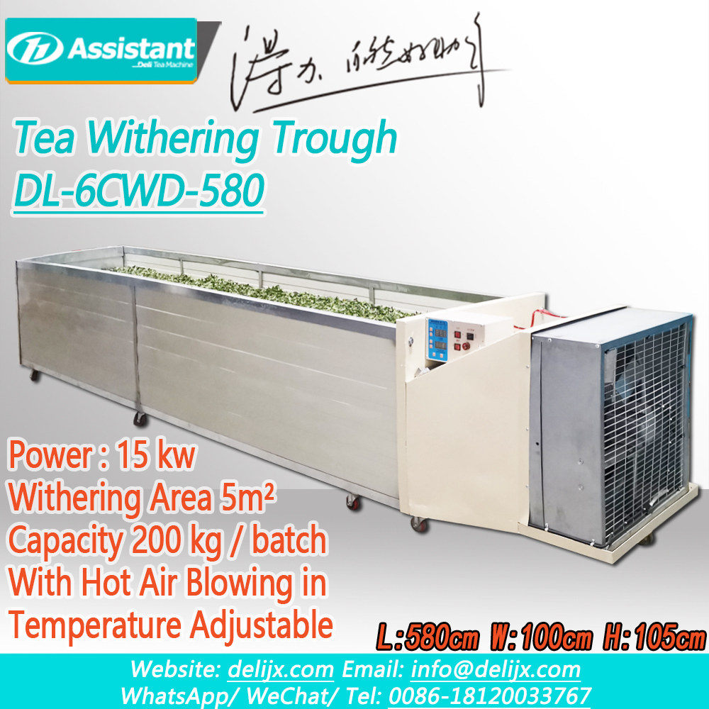 DL-6CWD-580 Green Black Tea Leaves Withering Process Trough Machine For Tea/Green-Black-Tea-Leaves-Withering-Process-Trough-Machine-For-Tea