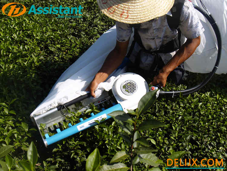 Backpack-type single man tea picking machine
