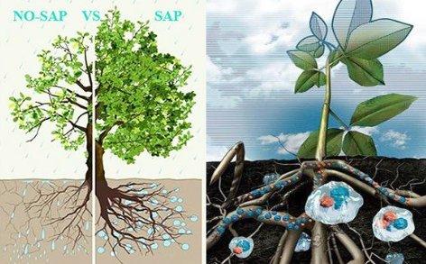 Super Absorbent Polymer for Fruit Trees